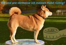 Bild von Hund messen – wie messe ich richtig und wo?