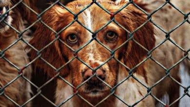 Bild von Hundevermittlung im Netz – nur seriöse Vermittlungen