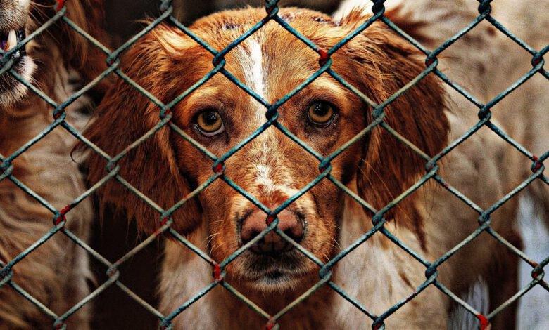 hundevermittlung hol dir deinen liebsten vom tierheim