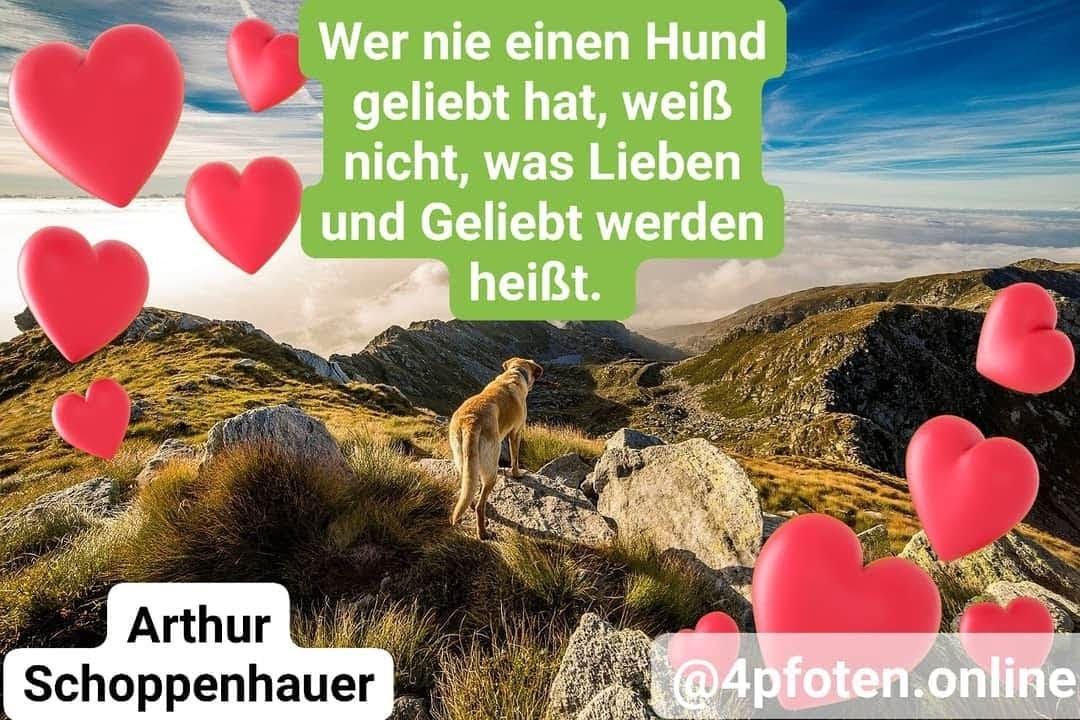 hundeweisheiten - von arthur schoppenhauer