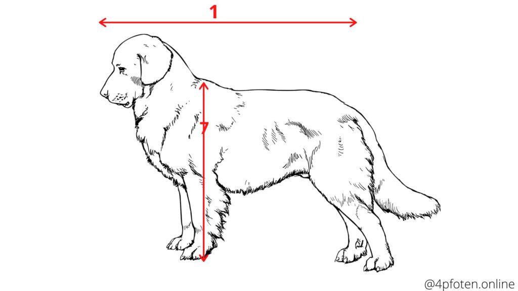 länge und schulterhöhe messen, passende masse für das hundebett
