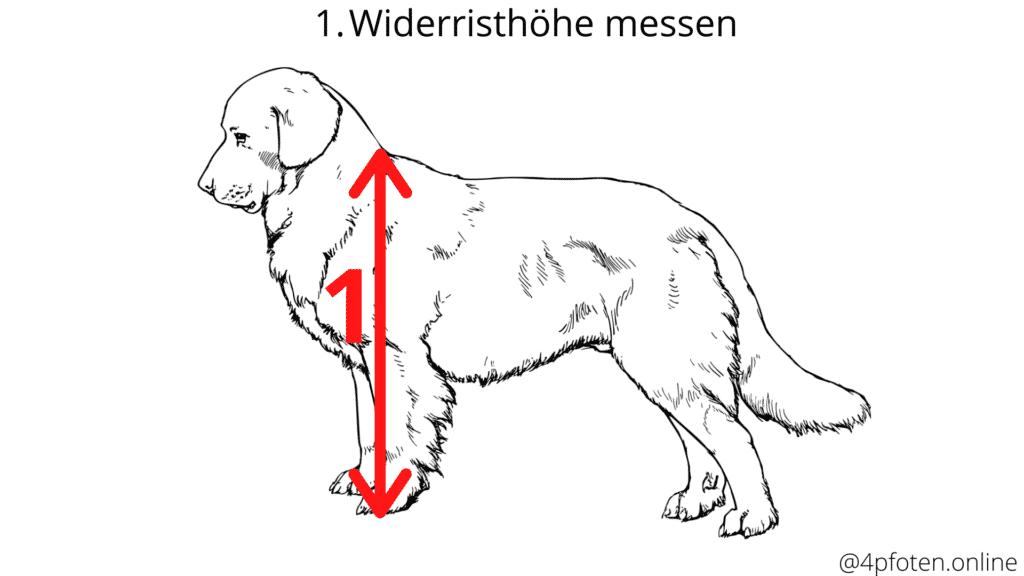 widerristhöhe messen vom hund