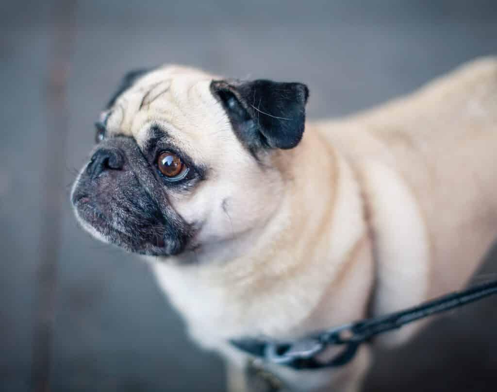 hund leinenführigkeit hundebeschäftigung zu hause