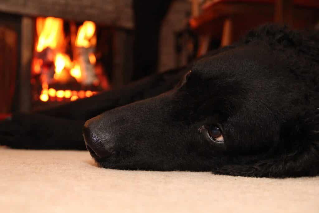 hundebeschäftigung zu hause entspannung vor dem ofen