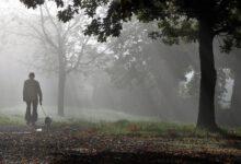 dunkle jahreszeit nebel sicher für hund und herrchen