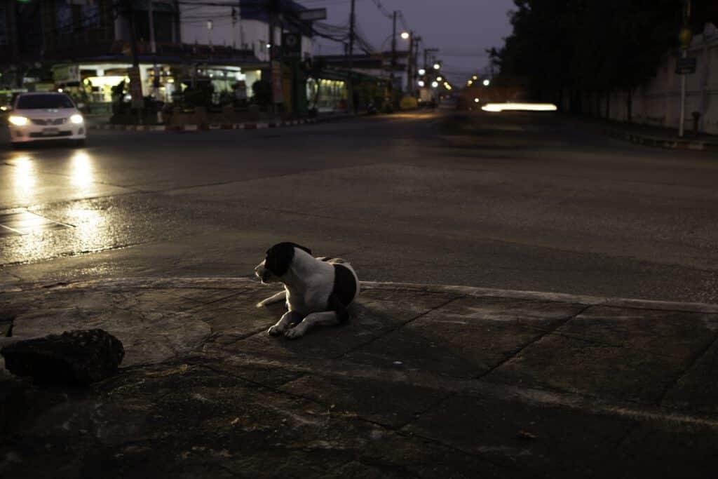 hund straße nacht dunkle jahreszeit