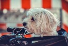 hundefahrradkorb für den lenker beitragsbild