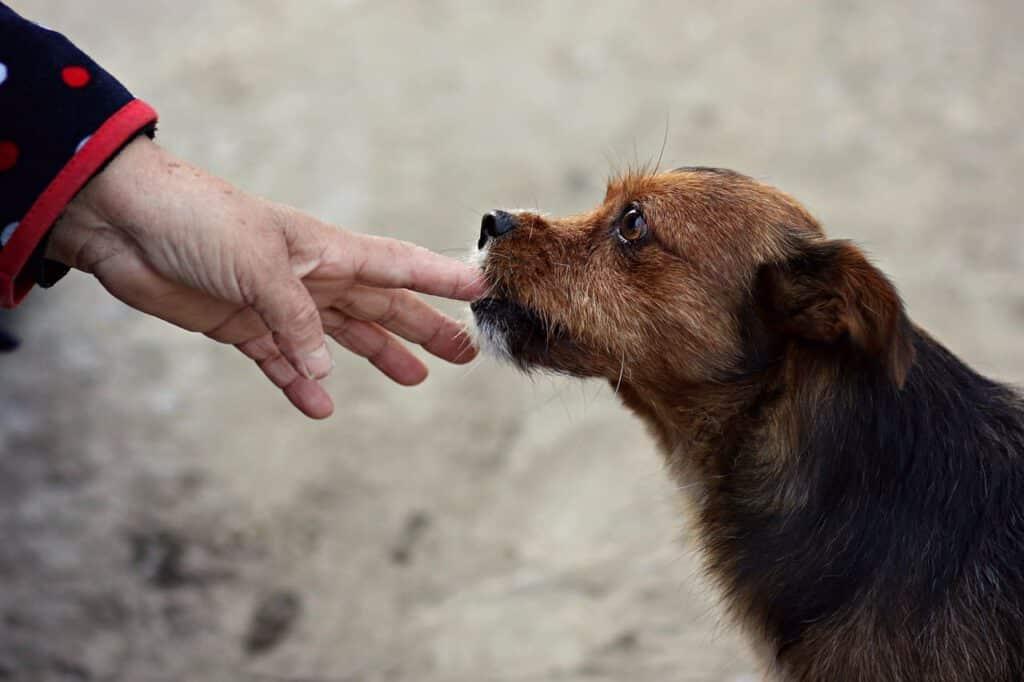lexikon hund buchstabe b beissen