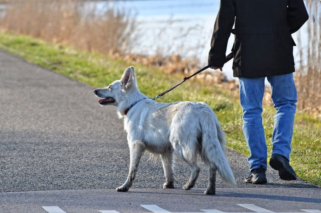 lexikon hund buchstabe b bewegung