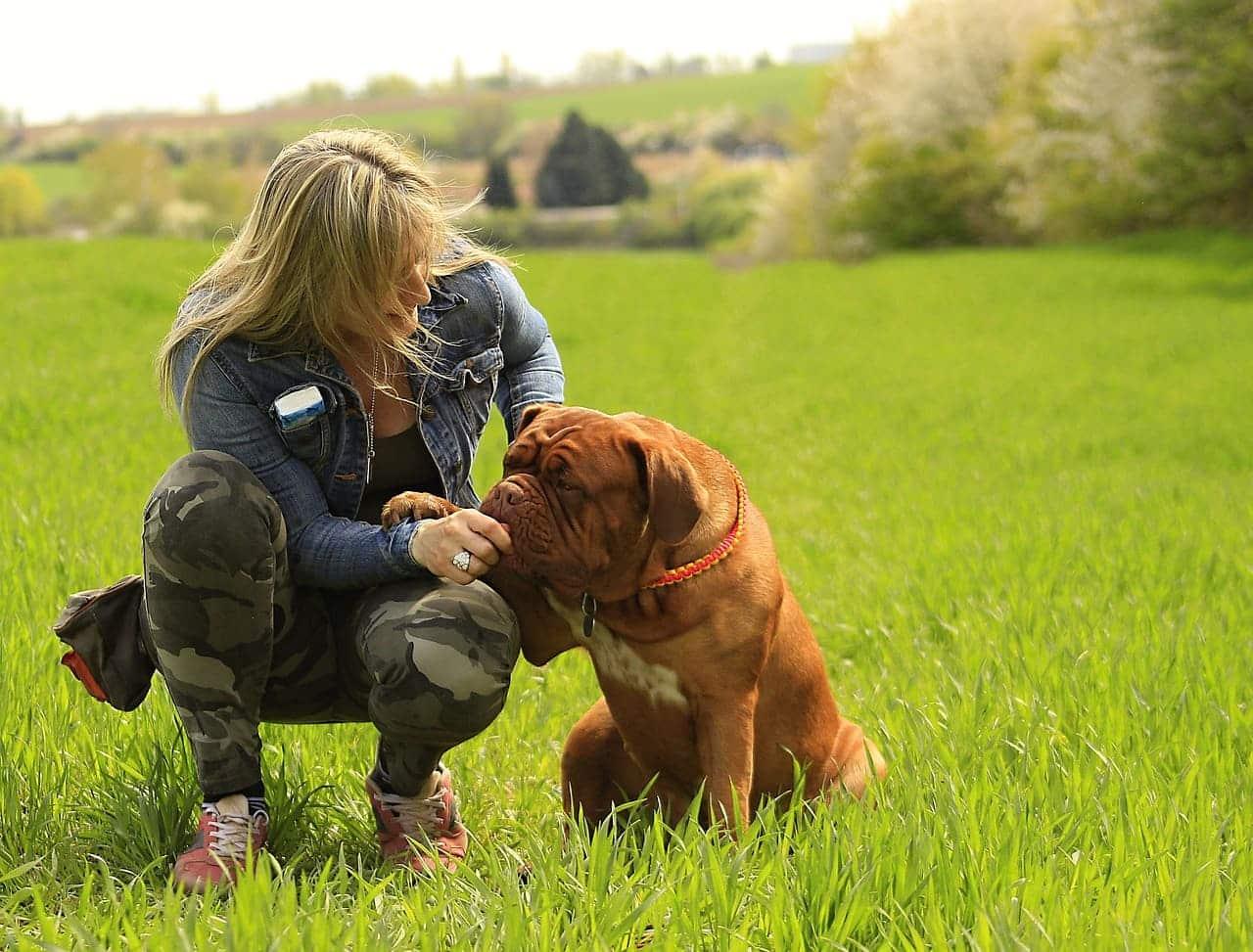 hund adoption hunde züchterin bei der arbeit