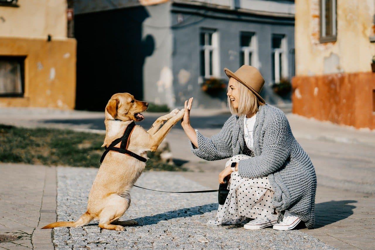 hund adoption mädchen mit hund