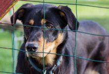 hund adoption in corona zeiten beitragsbild