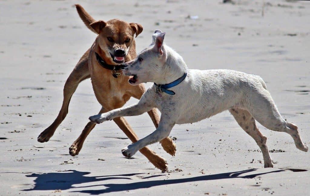 hundehaftpflichtversicherung beim biss