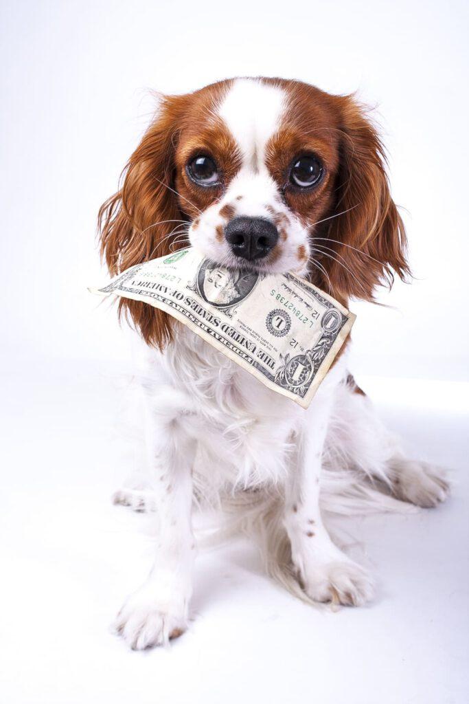 hund kaufen - welche kosten entstehen