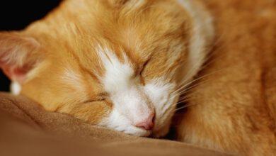 schlafposition der katze beitragsbild