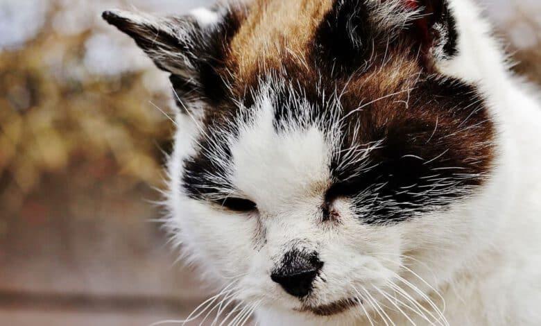 entwurmen der katze beitragsbild