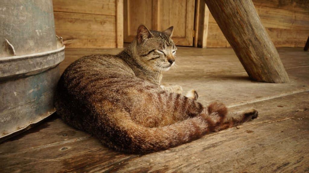 mögliche position wo sich die katze nicht wohl fühlt