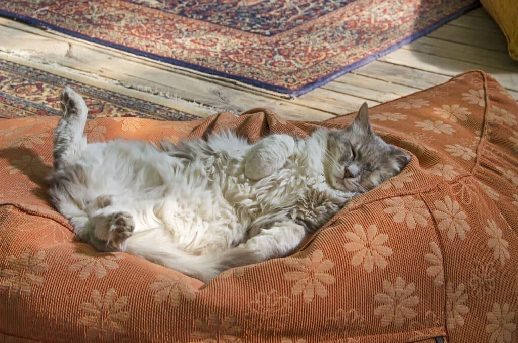 katze schlafend auf dem rücken