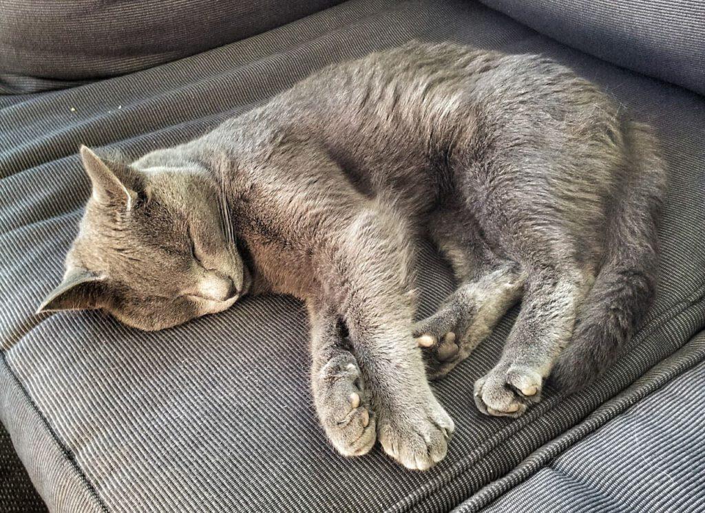 schlafposition der katze seitenlage sehr bequem