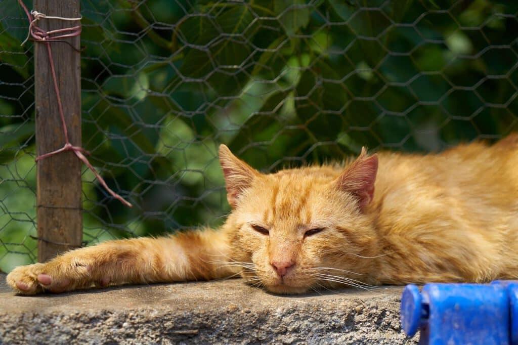 katze streckt sich lange aus bei warmen temperaturen