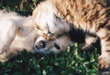 hund an andere haustiere gewöhnen hund und katze vereint beitragsbild