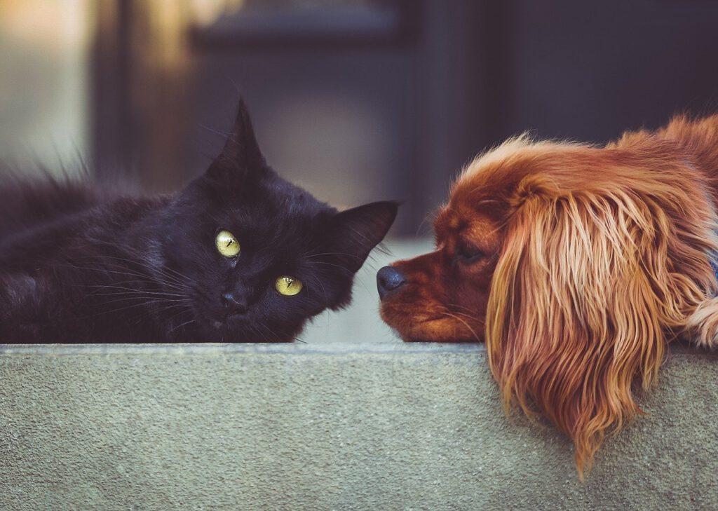 hund mit katze friedlich ruhend auf einer treppe