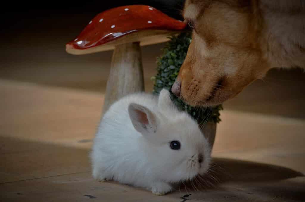 hund und kaninchen als haustiere