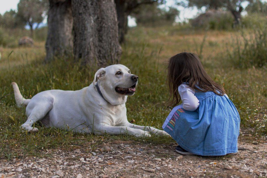 hunde die bellen beißen nicht, hund und kind annäherung