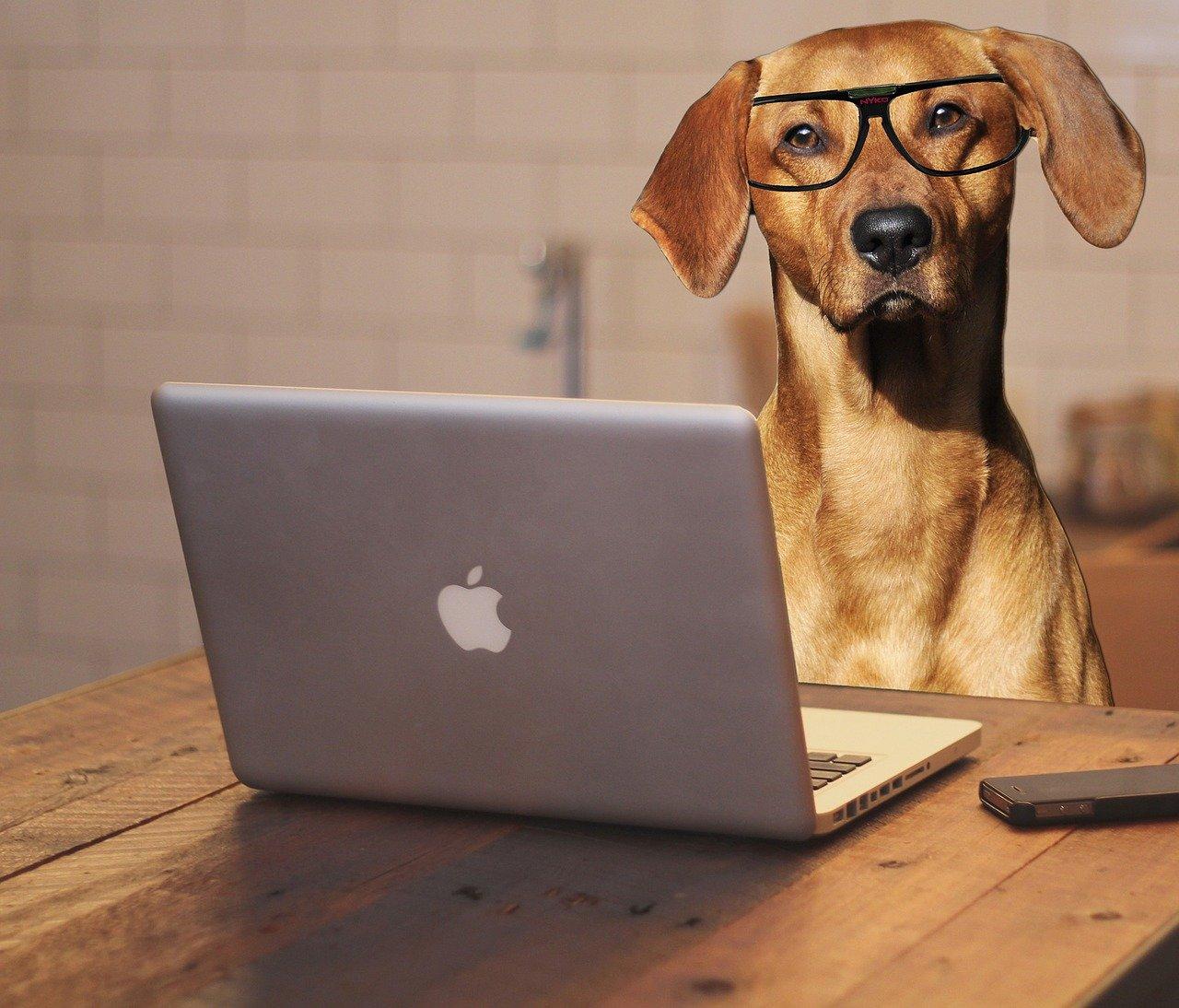 hundesachkundeprüfung