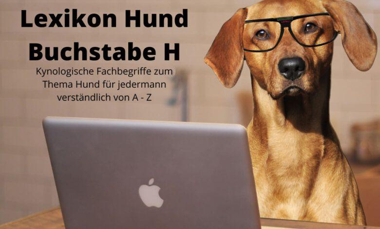 lexikon hund buchstabe h