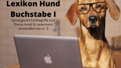 lexikon hund buchstabe i