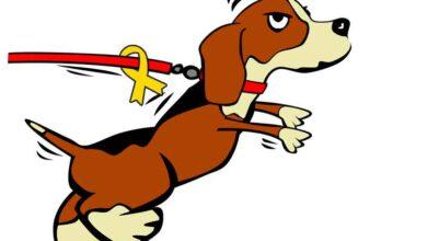 hund mit gelber schleife beitragsbild 4 pfoten das portal für hund und katz