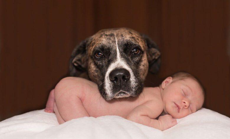 hund und baby beitragsbild