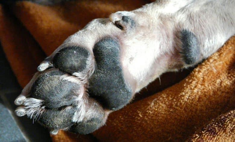 krallenverletzung beim hund
