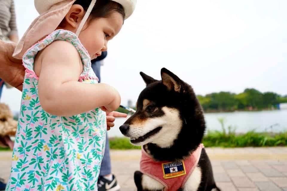 hund und baby kontakt aufnehmen zum hund