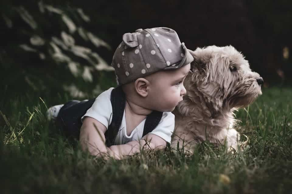 hund und baby gemeinsam im garten